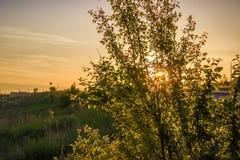 Attraverso l'albero le foglie fanno i loro raggi di modo del tramonto di estate Immagini Stock Libere da Diritti
