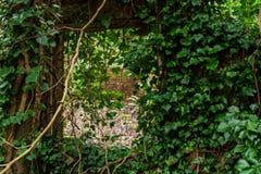 Attraverso la finestra aperta Fotografia Stock Libera da Diritti
