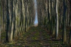 Attraverso la foresta Fotografie Stock Libere da Diritti