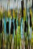 Attraverso la foresta delle canne fotografia stock