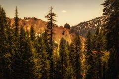 Attraverso le cime dell'albero Fotografia Stock Libera da Diritti