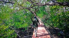 Attraverso le mangrovie Fotografia Stock Libera da Diritti