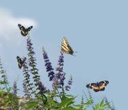 Attrazione del Bush di farfalla Fotografia Stock Libera da Diritti