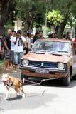 Attrazione del cane Immagini Stock Libere da Diritti