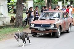 Attrazione del cane fotografie stock libere da diritti