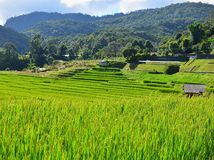 Attrazioni naturali nella stagione delle pioggie in Tailandia del Nord Immagine Stock Libera da Diritti