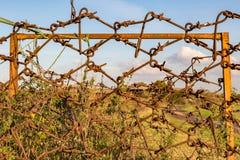 Attrezzatura antica dell'azienda agricola, abbandonata ed arrugginente e fungente da recinto Fotografia Stock Libera da Diritti