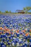 Attrezzatura antica dell'azienda agricola in un campo dei bluebonnets Fotografia Stock