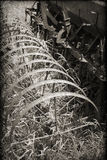 Attrezzatura d'annata dell'azienda agricola nella seppia con una sovrapposizione strutturata Fotografie Stock Libere da Diritti
