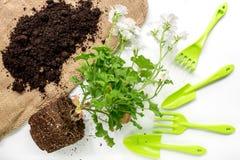 attrezzatura di giardinaggio con il rastrello e la cazzuola per le piante crescenti sulla vista superiore del fondo bianco dello  Fotografia Stock