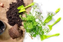 attrezzatura di giardinaggio con il rastrello e la cazzuola per le piante crescenti sulla vista superiore del fondo bianco dello  Fotografia Stock Libera da Diritti