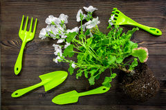 Attrezzatura di giardinaggio con il rastrello e la cazzuola per le piante crescenti sulla vista superiore del fondo di legno dell Fotografie Stock
