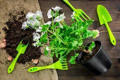 Attrezzatura di giardinaggio con il rastrello e la cazzuola per le piante crescenti sulla vista superiore del fondo di legno dell Immagini Stock Libere da Diritti