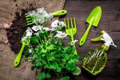 attrezzatura di giardinaggio con spruzzo, il rastrello e la cazzuola per le piante crescenti sulla vista superiore del fondo di l Immagine Stock