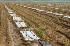 Attrezzatura di irrigazione nei campi Immagine Stock