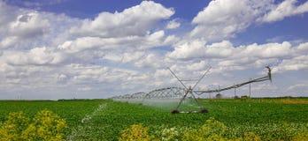 Attrezzatura di irrigazione sul campo dell'azienda agricola con le nuvole bianche Fotografia Stock Libera da Diritti