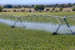Attrezzatura di irrigazione in un giacimento della patata dell'Idaho Fotografia Stock Libera da Diritti