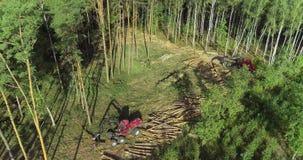 Attrezzatura moderna per disboscamento, mietitrice della foresta stock footage