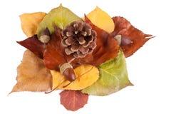 Attrezzo d'automne Photo libre de droits