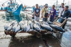 Atum de atum amarelo que está sendo descarregado Foto de Stock Royalty Free