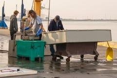 Atum do peso dos pescadores de 2018_11_20 Arcata EUA apenas fora do barco na doca a vender ao vendedor de peixe em um dia chuvoso imagem de stock
