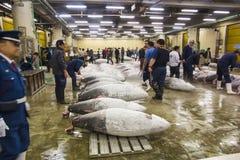 Atum para o leilão no mercado de peixes de Tsukiji Fotos de Stock Royalty Free