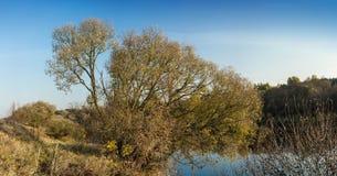 Atumn en la orilla del río Foto de archivo