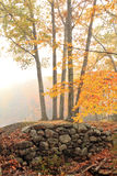 Atumn fog. A foggy morning trail with a stone wall Stock Image