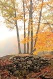 Atumn fog Stock Image