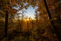 Atumn lasu zmierzch Obrazy Royalty Free
