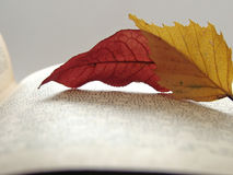Atumn leaves on open book Royalty Free Stock Photography
