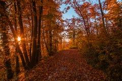 Atumn skogväg på solnedgången Arkivfoton