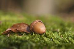 Atumn-Stillleben mit Eichel und Herbstblatt Stockfotografie