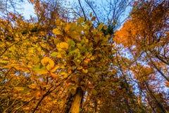 Atumn żyje na drzewie Obrazy Royalty Free