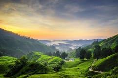 Aturdindo o nascer do sol sobre a plantação de chá em Cameron Highlands, Malásia fotografia de stock