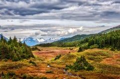 Aturdindo a paisagem de um córrego de enrolamento que corre através do wilde fotografia de stock royalty free