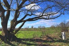 Aturdir el árbol viejo nudoso delante de un paisaje del cielo azul imagen de archivo