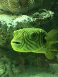 Aturdir especie colorida de los pescados fotografía de archivo