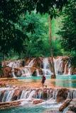 Aturdir a Tad Sae Waterfall fuera de Luang Prabang Gema ocultada en Laos No popular y apretado menos Sabido más por la gente loca imagen de archivo libre de regalías