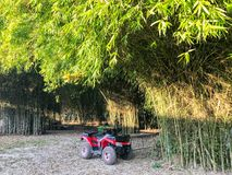 Atv at the bamboo tree. In the park Royalty Free Stock Images