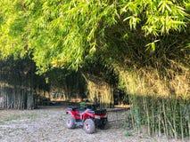 Atv bij de bamboeboom Royalty-vrije Stock Afbeeldingen