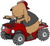 ATV Hund Stockbild