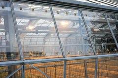 Außenansicht des grünen Hauses mit Lichtern an und Metallbau Stockfoto