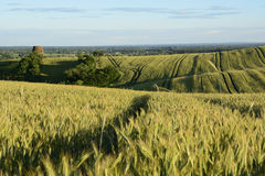 Außerhalb der Stadt - ländliche Landschaft - eine alte Windmühle auf dem Feld Lizenzfreies Stockfoto