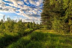 Au bord de la forêt un jour chaud d'été Images libres de droits