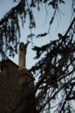 Au château du nel Cimino de Soriano Madonna se protège Photos libres de droits