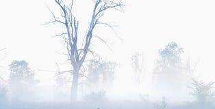 Au delà de la brume, vieil arbre sec dans un brouillard, paysage mystérieux Images libres de droits