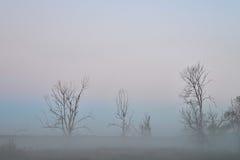 Au delà de la brume, vieux arbres secs dans un brouillard, paysage mystérieux Image libre de droits