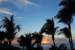 Au delà des palmiers Photographie stock