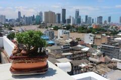 Au-dessus de l'arbre de vue de Chao Phraya River et du paysage urbain avec le ciel bleu et le foyer choisi Images libres de droits